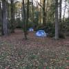Azalea Meadow Camping