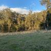 Stonepine Ridge: Bush Paddock