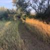 Farm Land With Mountain Views: Tent
