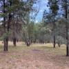 d) The Pine Grove