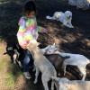 Owlbee Farm Campground - Animals