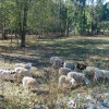 Sleep With Sheep! Creekside Camping