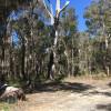 Natural Bush No amenities sites