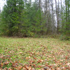 Forested with River Access/Firepit
