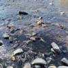 Mole River Camping