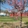 Pinnacle Farms RV site