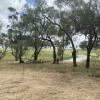 Barunah Plains - Caravan site 1