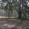 Greenacres - The Fig Tree
