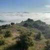 Zephyr Mountain Grove