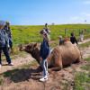 Camel Farm - Shady 3 Tents & Swags