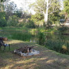 Canungra Valley Off Grid camping