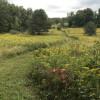 Szaro Farm - Woods, Creek, Fields