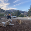 Camp Out @ Freedog Farms