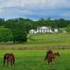 Classic Kentucky Horse Farm