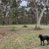 Ironbark Ranch - Free Range