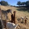 Z- Ranch