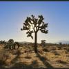 Joshua Tree Dry Lake