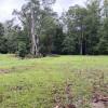 Fig Paddock Crystal Creek Ranch