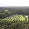 Peppermint Farm. Karri forest.