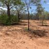 Kimberley Bushlands