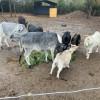 Rural Farm Getaway