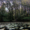 Swamp Castle Campground- 30 Amp