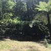 Rainforest Camping & Big Breakfast