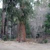 Vintage 1 Pine Forest  Campsite