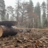 Rockingbird Meadow - Camp 9 {Best}