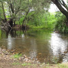 Bush Camp on the Warrill Creek