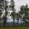 Timbertop Tranquility Bush Camp