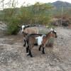 Animal Lover's Retreat - RV Site