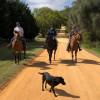 Roaming Ranch