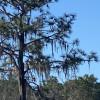 Deenstill Ranch Camp site