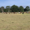 Cinch Up Ranch- Hervey Bay