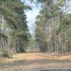 Forrest Camp Near Lake Livingston