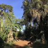 Anderson's Tropical Food Forest