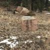 Rustic Creek Ranch #6 Pie Rock