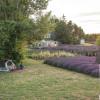 Lavender Fields Forever 1 night