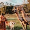Capricorn Camel Camp - Unpowered