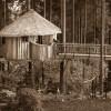 Treehouse - Africa in Auburn