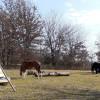Buffalo Tipi Adventure Stockton
