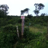 Jungle and Cenotes