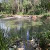 The Knoll- Watergum pools