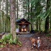 The Mini Forest Cabins