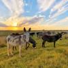 Spectacular Skies & Donkey Paradise