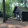 the woods quad: Zigmund