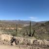 North Phoenix desert brushy wild