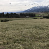 Bellamy family farm