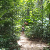 Daintree Jungle Twin